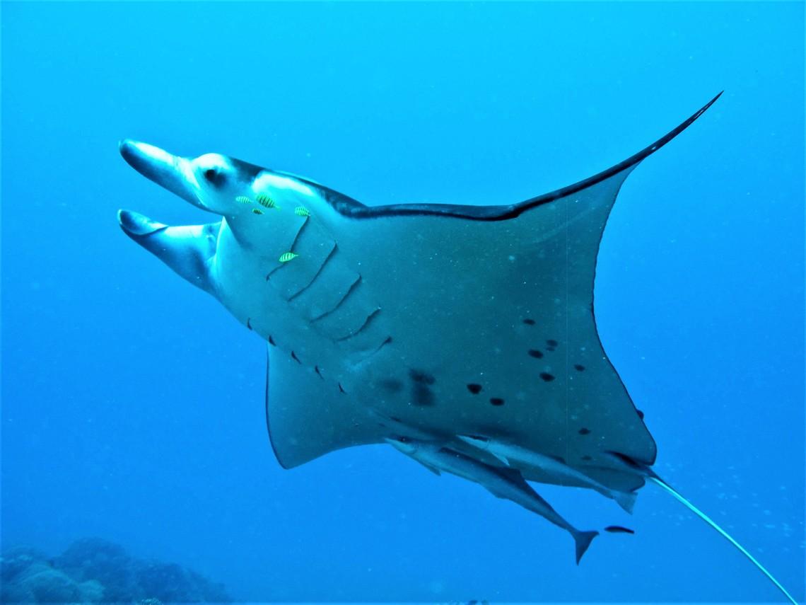 https://tahititourisme.ca/wp-content/uploads/2017/08/Bora-Bora-Reef-Discovery-3.jpg