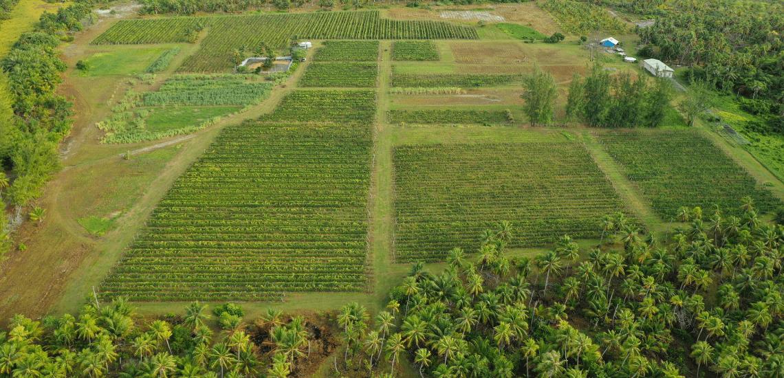 https://tahititourisme.ca/wp-content/uploads/2017/08/Vin-de-Tahiti_1140x550-min.png