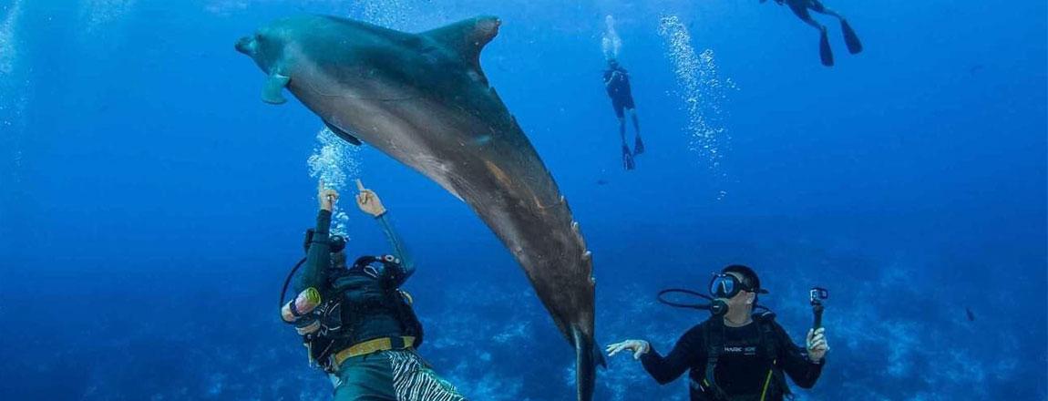 https://tahititourisme.ca/wp-content/uploads/2017/10/Rangiroa-Diving-Center-1150x440px.jpg