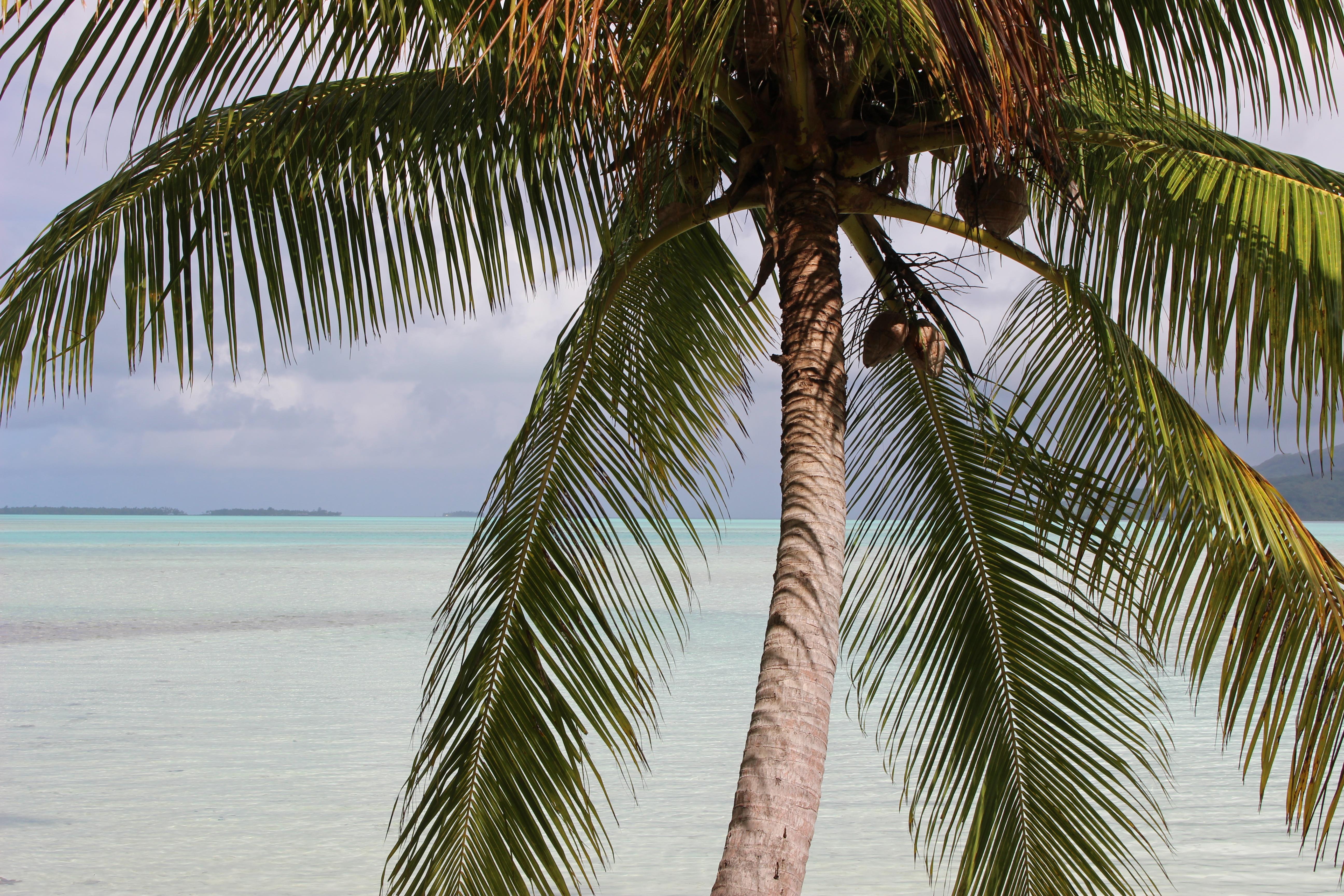 https://tahititourisme.ca/wp-content/uploads/2017/12/vooooyagesamarc-tahiti-2015-ml-14.jpg