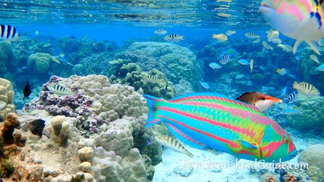 https://tahititourisme.ca/wp-content/uploads/2017/12/xDSC01089bora-bora-snorkeling.jpg.pagespeed.ic_.f9w931-2lN.jpg
