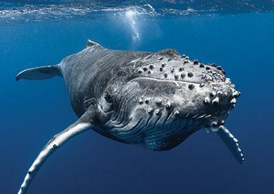 https://tahititourisme.ca/wp-content/uploads/2018/07/sejours-plongees-baleine-e-tahiti-travel-1.jpg