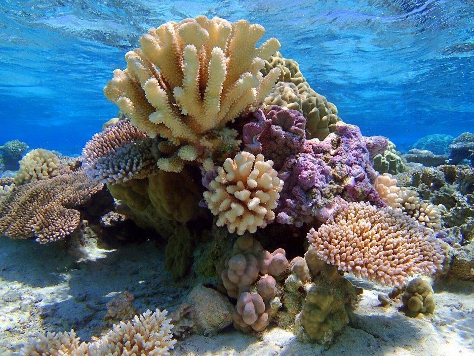 https://tahititourisme.ca/wp-content/uploads/2019/01/Bora-Pure-Snorkeling-small.jpg