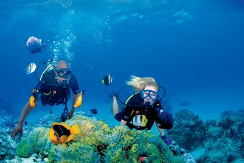 https://tahititourisme.ca/wp-content/uploads/2019/01/CG.A_Diving-Bora_D8X_4229-low.jpg