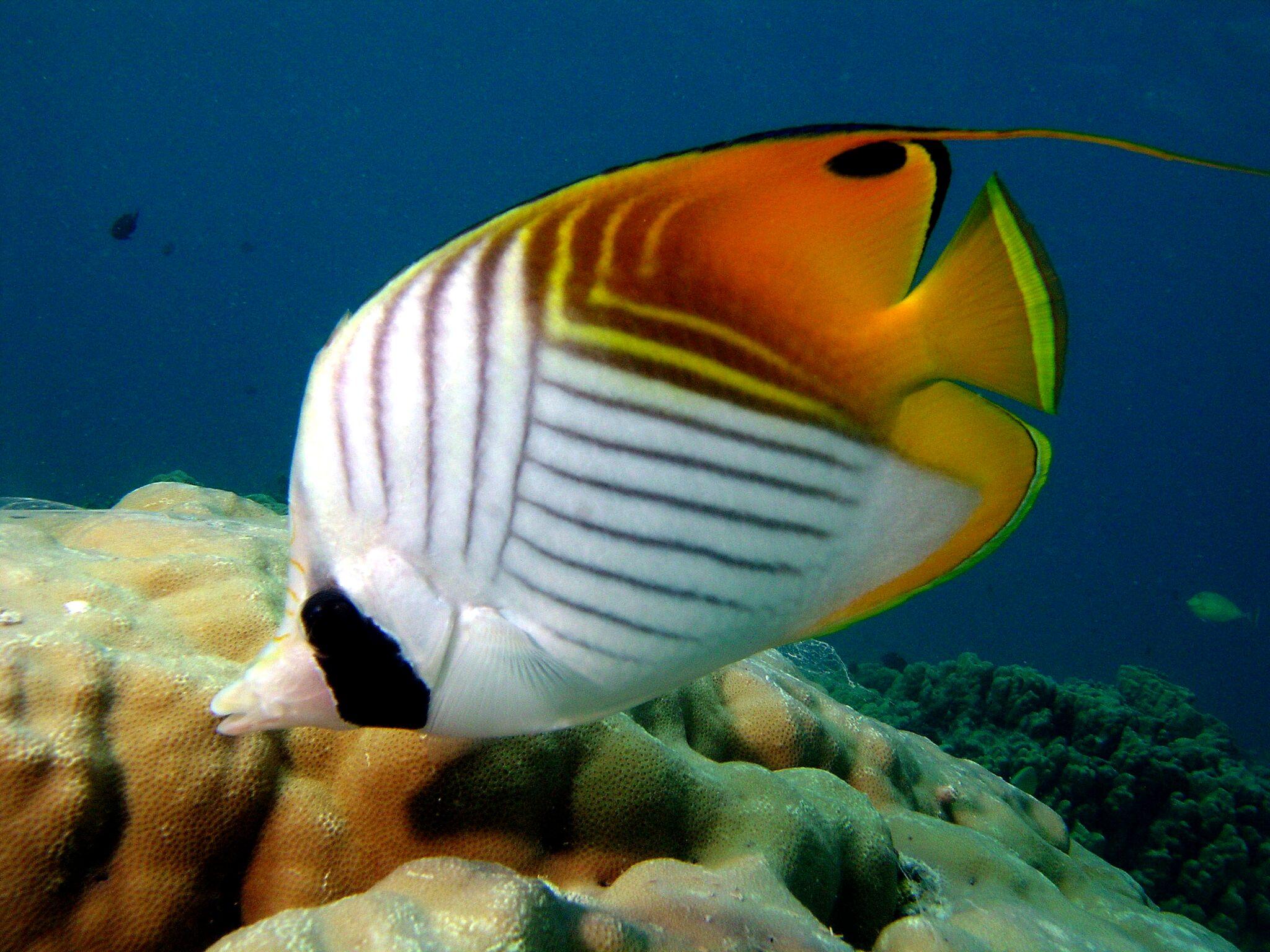 https://tahititourisme.ca/wp-content/uploads/2019/01/rangi-poisson.jpeg