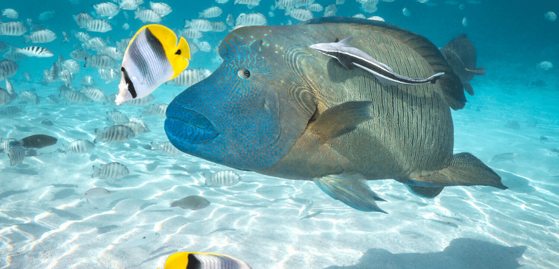 https://tahititourisme.ca/wp-content/uploads/2020/02/SnorkelingExpeditions2_1140x550-min.png