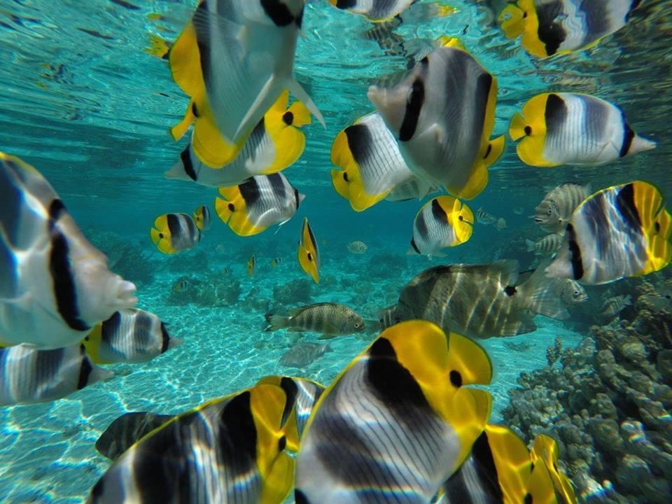https://tahititourisme.ca/wp-content/uploads/2020/06/jardin-corail-tahaa-5.jpg