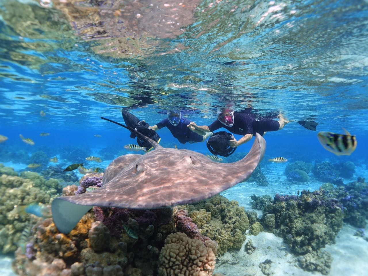 https://tahititourisme.ca/wp-content/uploads/2020/09/Sea-Scooter-Snorkeling-Tour-à-moorea-copie-2.jpg