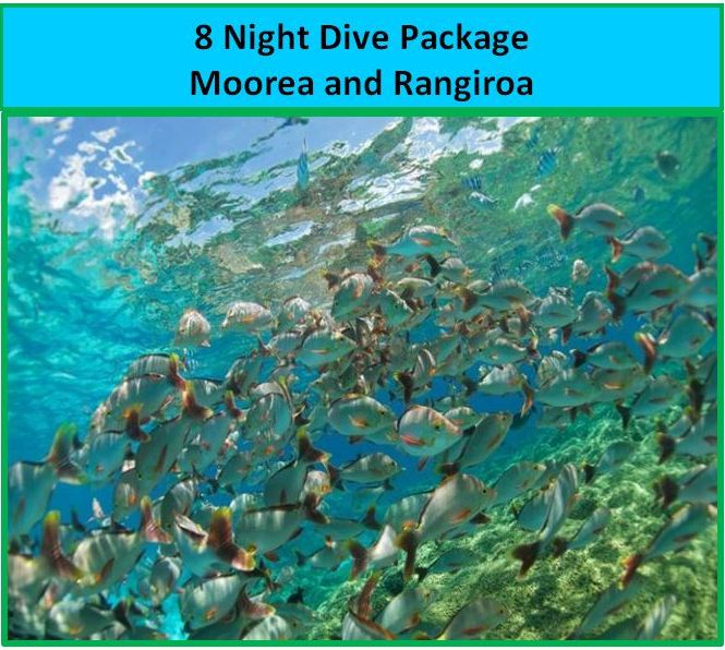 Diving in Moorea and Rangiroa